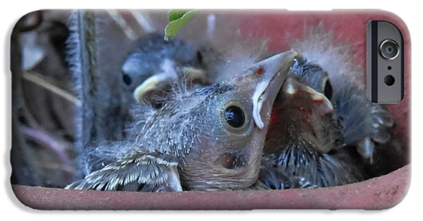 Bonding iPhone Cases - Baby Junco Birds  iPhone Case by Beth Wolff