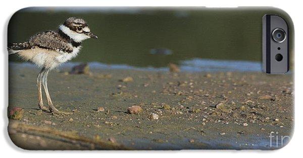 Baby Bird iPhone Cases - Baby Killdeer iPhone Case by Ruth Jolly