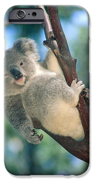 Baby Koala Bear iPhone Case by Himani - Printscapes
