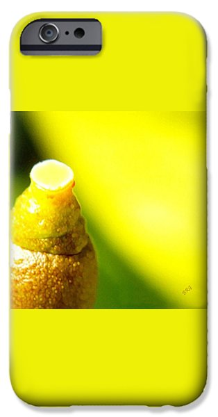 Baby Lemon On Tree iPhone Case by Ben and Raisa Gertsberg
