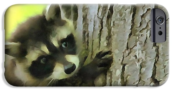 Raccoon iPhone Cases - Baby Raccoon In A Tree iPhone Case by Dan Sproul