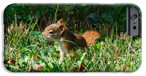 Farm Stand iPhone Cases -        Baby Red Squirrel iPhone Case by Joan Kaplan
