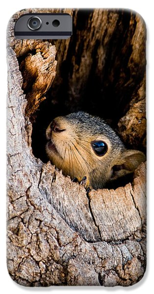 Fox Squirrel iPhone Cases - Baby Squirrel in Nest iPhone Case by Betty LaRue