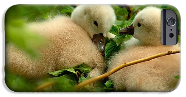 Baby Bird iPhone Cases - Baby Swans iPhone Case by Harry Spitz