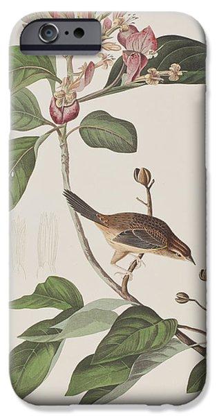 Sparrow iPhone Cases - Bachmans Sparrow iPhone Case by John James Audubon