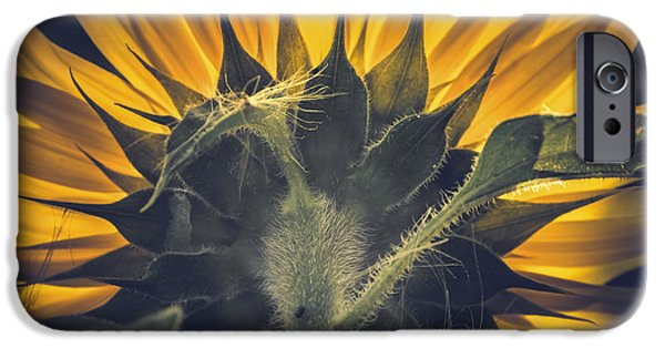 Agriculture iPhone Cases - Back lit and back facing iPhone Case by Chris Fletcher
