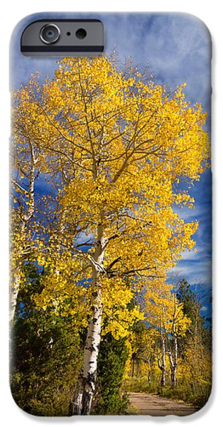 Pines iPhone Cases - Back Road Beauty iPhone Case by Kathleen Bishop