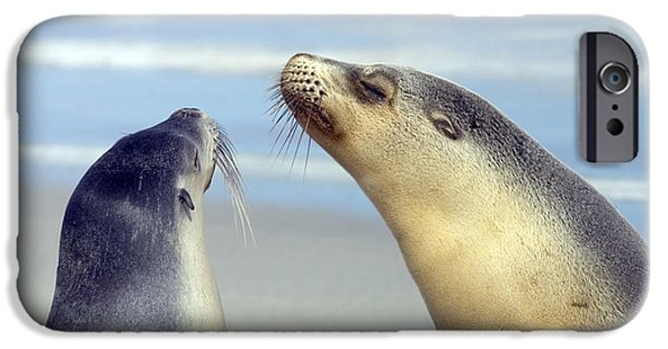 Sea Lions iPhone Cases - Backtalk iPhone Case by Mike  Dawson