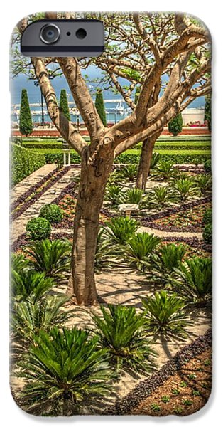 Plant iPhone Cases - Bahai Gardens in Haifa 1 iPhone Case by Dimitry Papkov