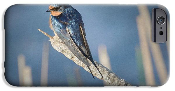 Barn Swallow iPhone Cases - Balance 3 iPhone Case by Fraida Gutovich