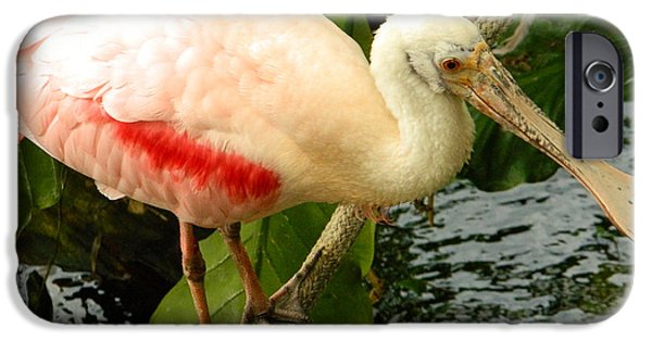 Smithsonian iPhone Cases - Balancing Act - Roseate Spoonbill iPhone Case by Emmy Marie Vickers