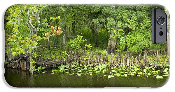 St. Johns River iPhone Cases - Bald Cypress With Red Maple iPhone Case by Inga Spence
