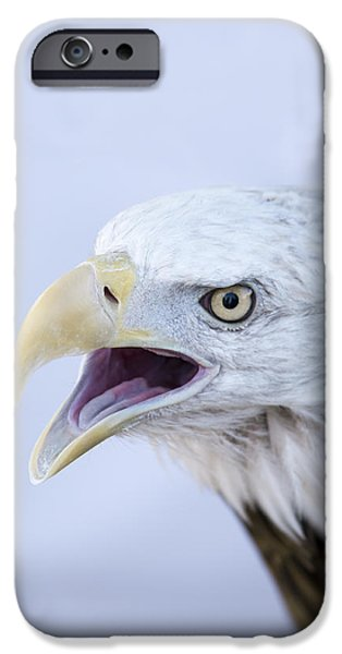Talking Pyrography iPhone Cases - Bald Eagle iPhone Case by Ilze Lucero
