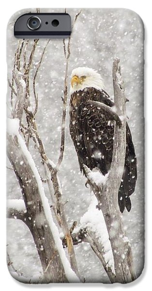 Great Seal Of The United States iPhone Cases - Bald Eagle in a Blizzard 1 iPhone Case by LeAnne Perry
