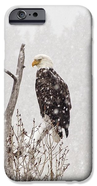 Great Seal Of The United States iPhone Cases - Bald Eagle in a Blizzard 2 iPhone Case by LeAnne Perry