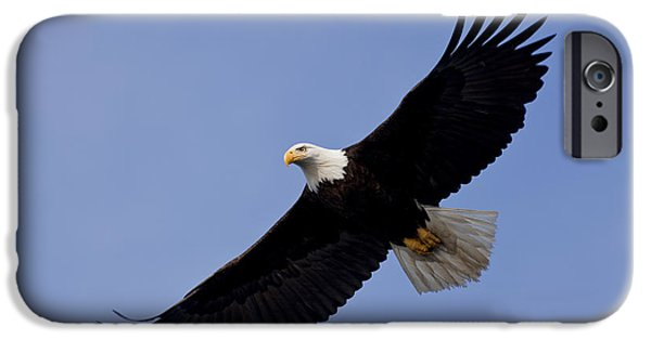 Instinct iPhone Cases - Bald Eagle in flight iPhone Case by John Hyde - Printscapes