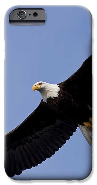 Bald Eagle in flight iPhone Case by John Hyde - Printscapes