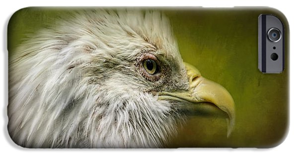 Nation iPhone Cases - Bald Eagle In The Grove iPhone Case by Jai Johnson