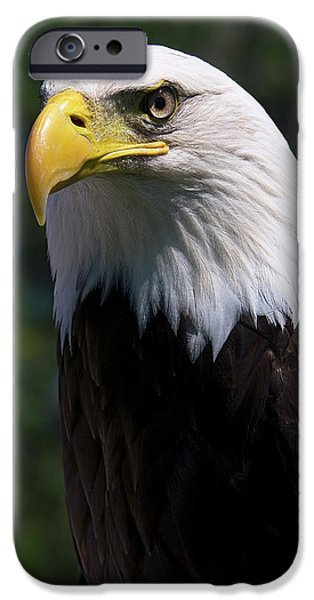 Bald Eagle iPhone Case by JT Lewis