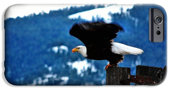 Recently Sold -  - West Fork iPhone Cases - Bald Eagle Take-off iPhone Case by Don Mann