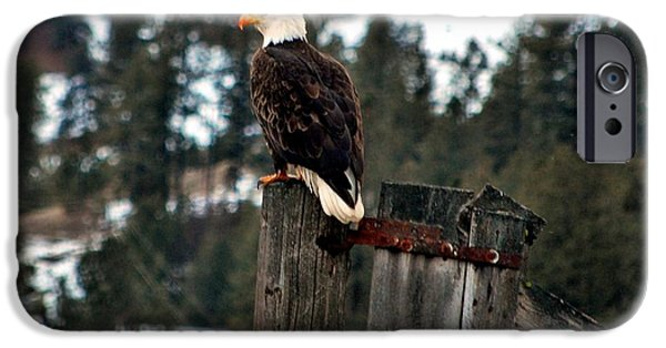 Recently Sold -  - West Fork iPhone Cases - Baldy on a Post iPhone Case by Don Mann