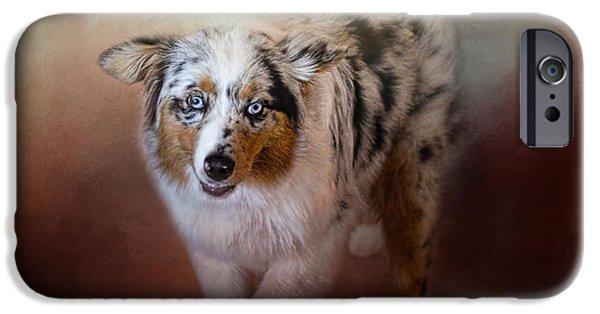 Dogs iPhone Cases - Ball of Energy - Australian Shepherd iPhone Case by Jai Johnson