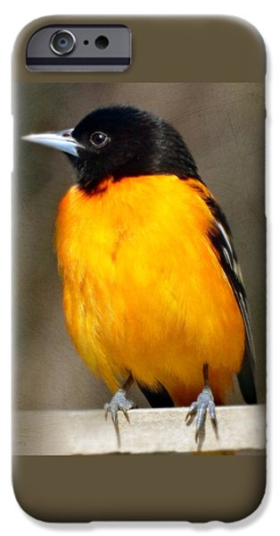Fauna iPhone Cases - Baltimore Oriole iPhone Case by Gena Weiser
