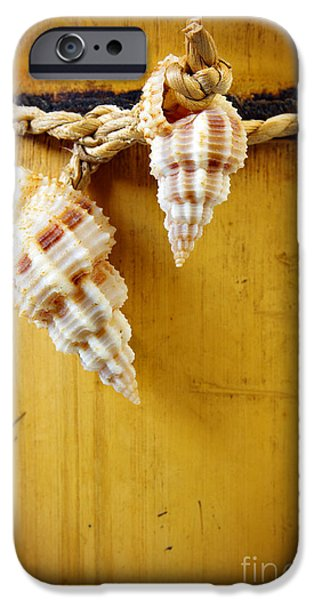 Antiques iPhone Cases - Bamboo And Conches iPhone Case by Carlos Caetano