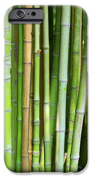 Bamboo Background iPhone Case by Carlos Caetano