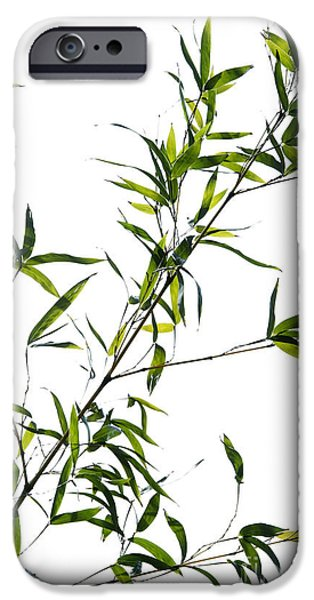 Bamboo Leaves iPhone Cases - Bamboo Leaves iPhone Case by Tim Gainey