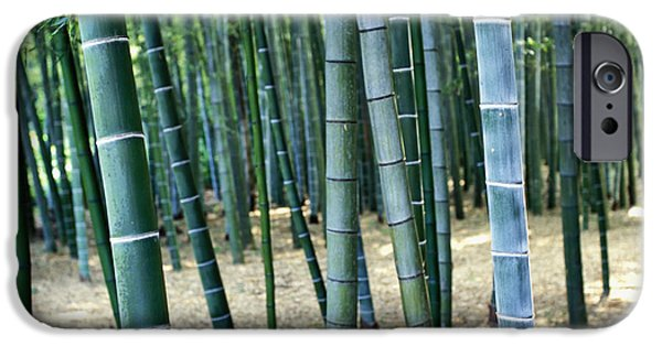Forest Detail iPhone Cases - Bamboo Tree Forest, Close Up iPhone Case by Axiom Photographic