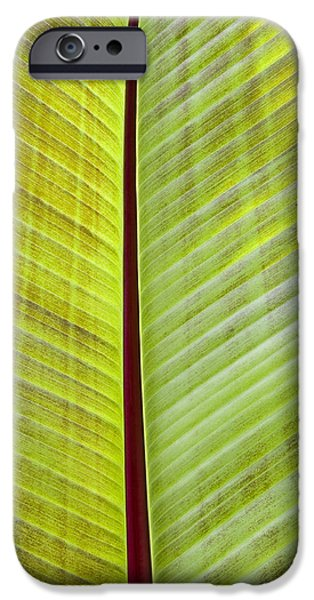 Abstract Digital Photographs iPhone Cases - Banana Leaf iPhone Case by John Trax