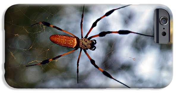 Bugs Pyrography iPhone Cases - Banana Spider   3 iPhone Case by Bob Johnson