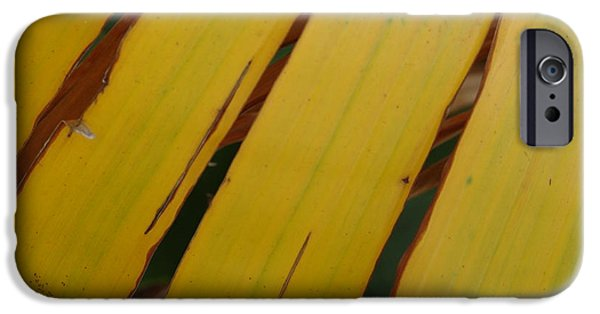 Nature Abstracts iPhone Cases - Banana Spilt II iPhone Case by Florene Welebny