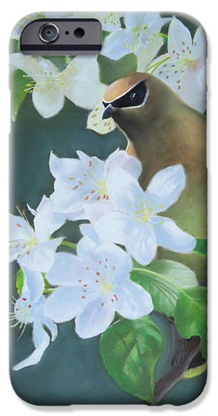 Cherry Blossoms Pastels iPhone Cases - Bandit in the Blossoms iPhone Case by Marcus Moller