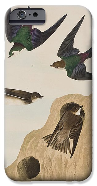 Banks iPhone Cases - Bank Swallows iPhone Case by John James Audubon