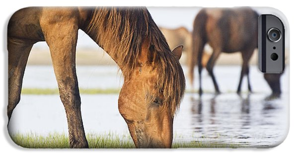 Cape Lookout iPhone Cases - Banker Horses on Tidal Flat iPhone Case by Bob Decker
