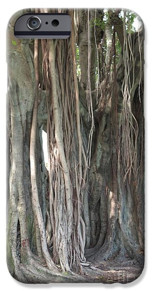 Tree Roots iPhone Cases - Banyan Tree iPhone Case by Carol Groenen