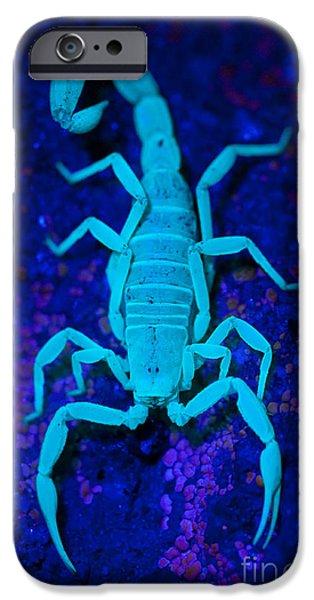 Arachnida iPhone Cases - Bark Scorpion By Blacklight iPhone Case by Stuart Wilson