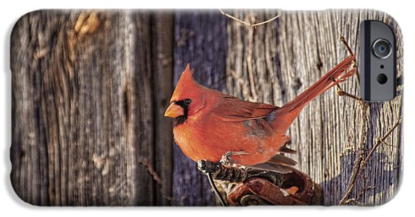 Old Barn iPhone Cases - Barn Door Cardinal iPhone Case by Timothy Flanigan