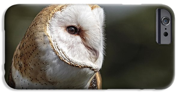 Disc iPhone Cases - Barn Owl Closeup D8716 iPhone Case by Wes and Dotty Weber