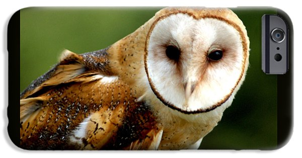 Birds iPhone Cases - Barn Owl iPhone Case by John Turner