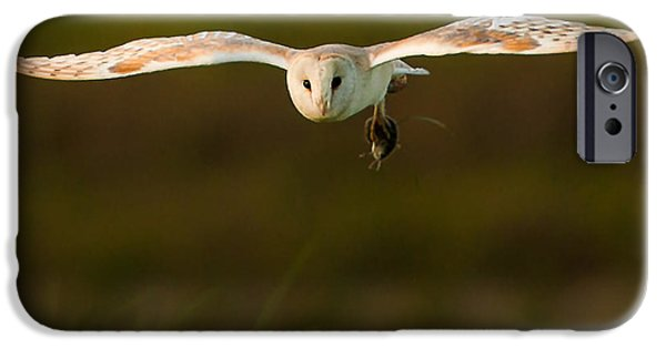 Animals Photographs iPhone Cases - Barn Owl iPhone Case by Paul Neville