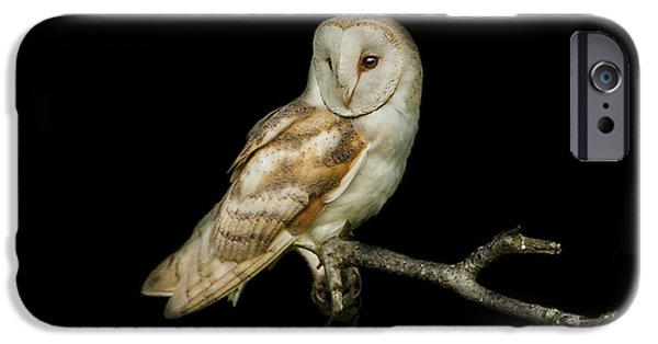 Barns Photographs iPhone Cases - Barn Owl Portrait iPhone Case by Paul Neville