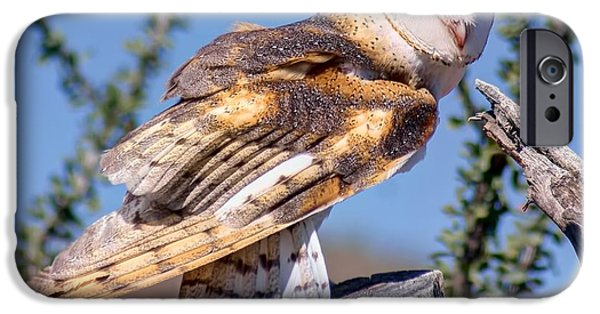Disc iPhone Cases - Barn Owl - Raptor iPhone Case by Nikolyn McDonald