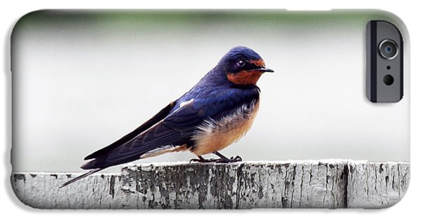 Barn Swallow iPhone Cases - Barn Swallow at Fort Larned iPhone Case by Catherine Sherman
