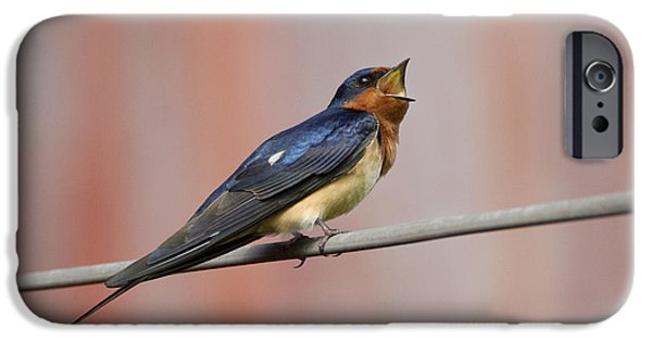 Barn Swallow iPhone Cases - Barn Swallow Calling iPhone Case by Marie Read