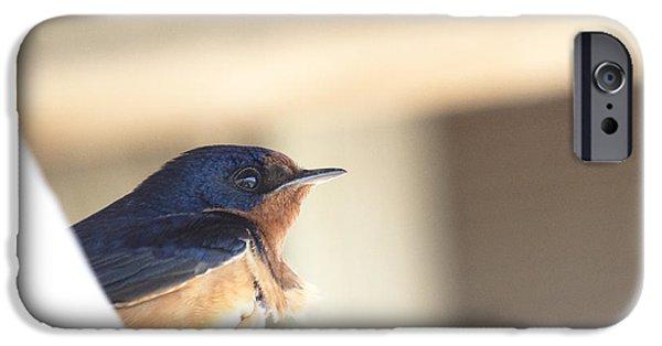 Barn Swallow iPhone Cases - Barn Swallow iPhone Case by Jeff Pieterick