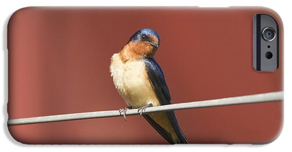 Hirundo iPhone Cases - Barn Swallow iPhone Case by Marie Read