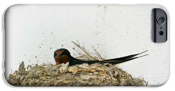Best Sellers -  - Barn Swallow iPhone Cases - Barn Swallow Nesting iPhone Case by Douglas Barnett